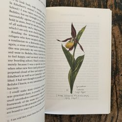 The Military Orchid by Jocelyn Brooke