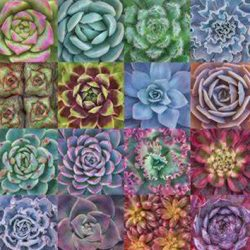 Succulent Jigsaw Puzzle Tinsmiths