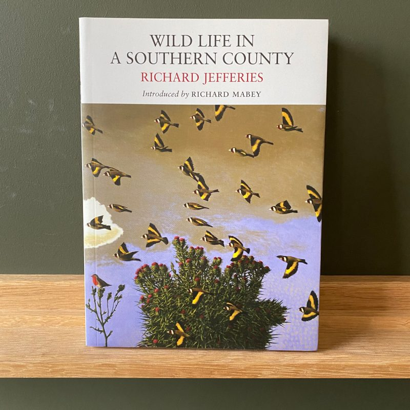 Wild Life In a Southern Country by Richard Jefferies